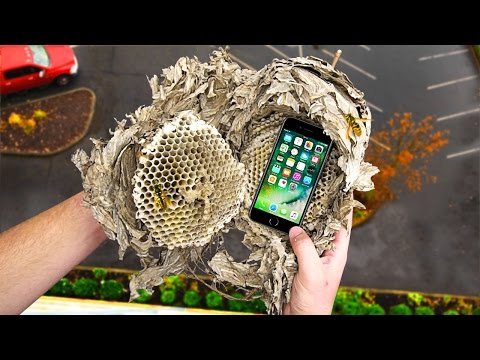 Thumbnail: Can a Wasp Nest Protect an iPhone 7 from a 100 FT Drop Test? - Gizmoslip