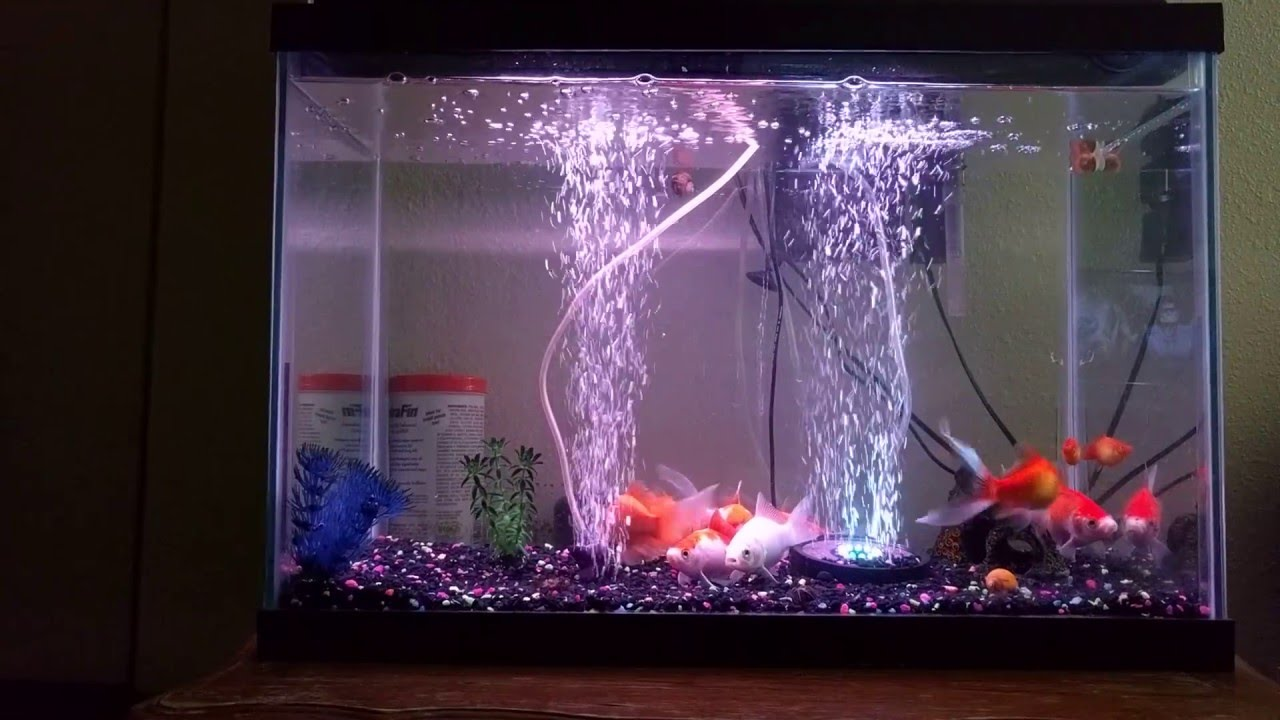 Aquarium fish tank bubble air curtain - Aquarium Fish Tank Air Curtain Bubble Generator Ekostore