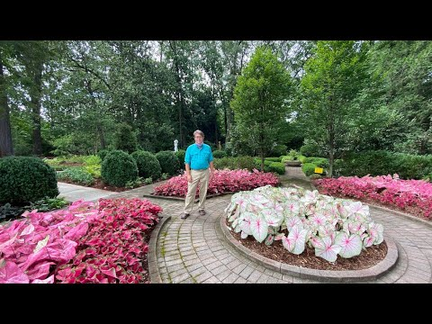 Dixon at Home   Caladiums with Dale Skaggs, Director of Horticulture