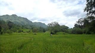 Sri Lanka,ශ්රී ලංකා,Ceylon,Beautiful Valley with Rice Paddy (02)