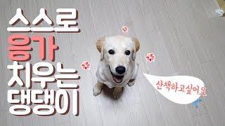 스스로 응가 치우는 댕댕이 / 귀여운 강아지 / 소녀의행성 :) 소행성 ♥ / 밤산책 / 래브라도 리트리버 / 강아지 대변