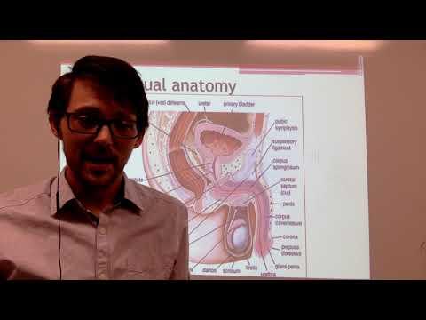 lecture-3-male-human-anatomy