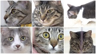 NyankuruTV Vol.3  にゃんくるTV【かわいい猫カフェ/保護猫】【Cute Cat Cafe】