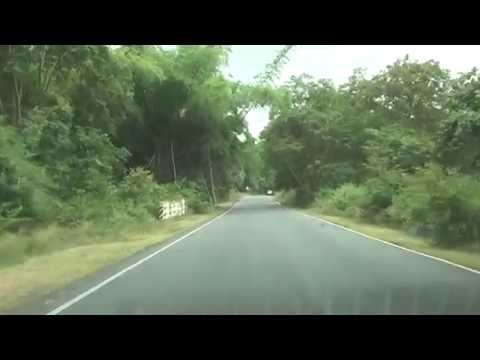 Satyamangalam Tiger Reserve - Road view video - Dhimbham to Chamarajanagar Route