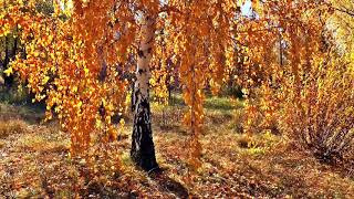 Golden Tree Decorated With Autumn Yellow Lives Free To Download