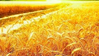 Фитокомплексы Чойс (CHOICE) Украина - биодобавки для здоровья