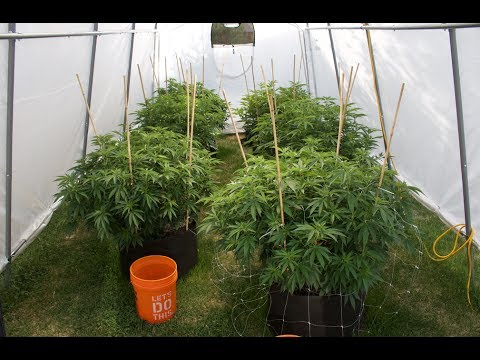 Outdoor Cannabis Grow Vlog #1