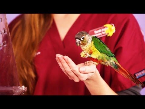 How Long Do Birds Live? | Pet Bird from YouTube · Duration:  1 minutes 28 seconds