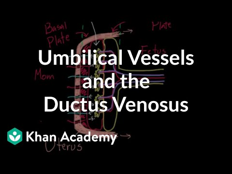 Umbilical vessels and the ductus venosus   Circulatory system physiology   NCLEX-RN   Khan Academy