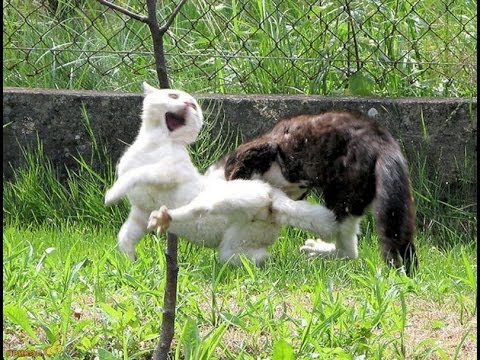 Битва кота с собакой
