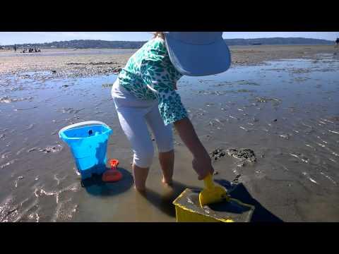 jetty island玩沙(挖到好多小蛤蠣喔!)