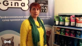 Правильное питание для собак и кошек, корм Gina