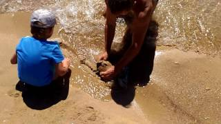 Лиманые черви, морские черви