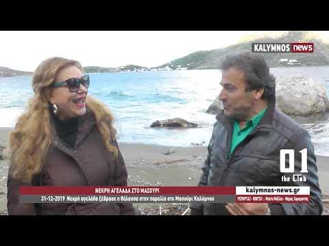 31-12-2019 Νεκρή αγελάδα ξέβρασε η θάλασσα στην παραλία στο Μασούρι Καλύμνου