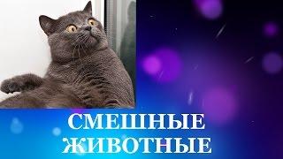 Смешные животные. Видео про кошек смешное бесплатно