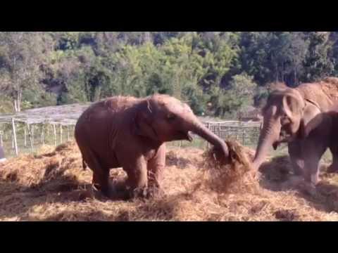 Thai Elephant Home and Organic Farm