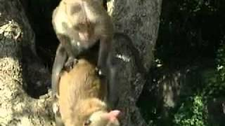 Animaux (sex)(fun).flv