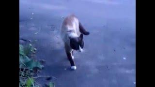 Кот ссыкло мастерски уходит от драки