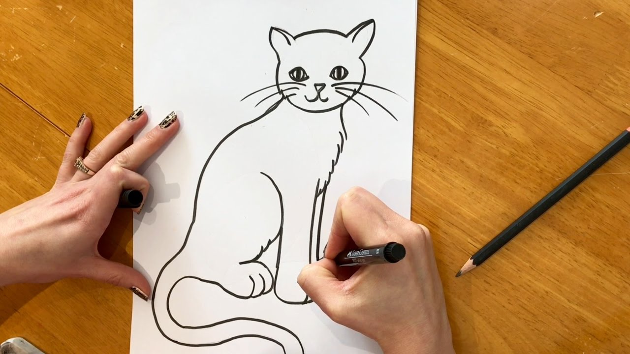 Beginners Lesson How To Draw A Cat Youtube