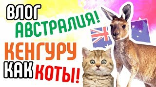 ВЛОГ. Австралия. Кенгуру как Коты. Что интересного в Австралии?