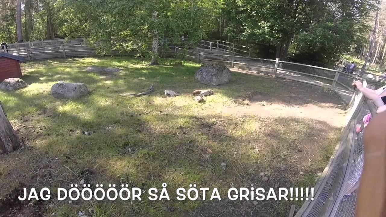 Lycksele Djurpark Youtube