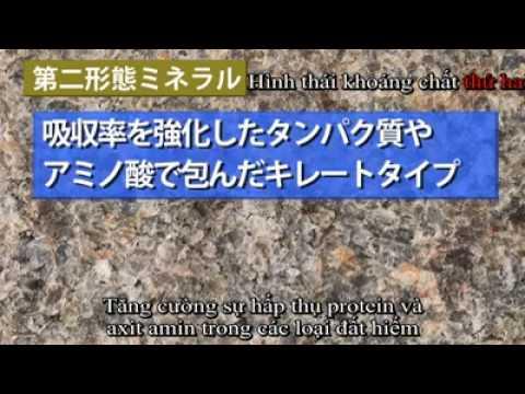 Nguồn gốc và sự hình thành KHOÁNG CHẤT THỰC VẬT CỔ ĐẠI THANKSAI - JAPAN