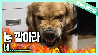 A Dog With Anger Management Issues! Like a Tatted Gangster!