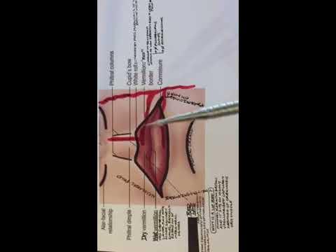 Lip Anatomy and Lip Landmarks - YouTube
