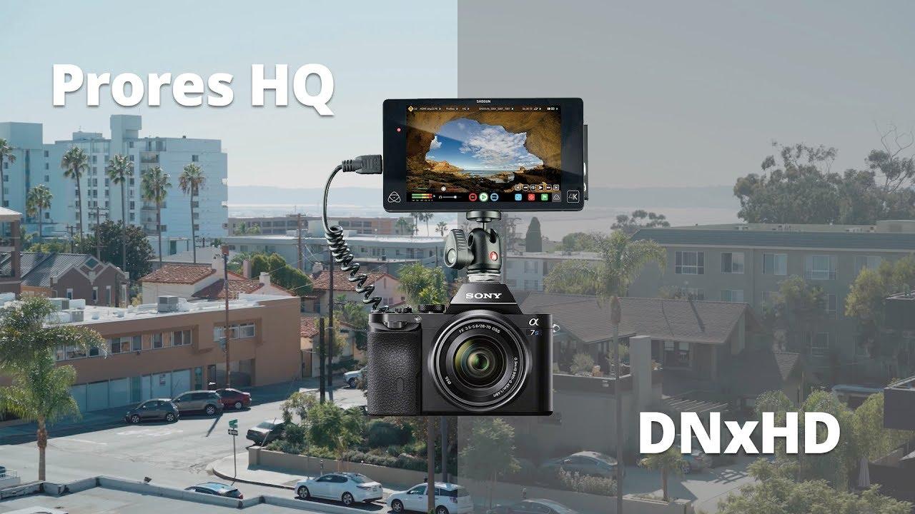 DNxHD vs  Apple ProRes – FilmIn5D