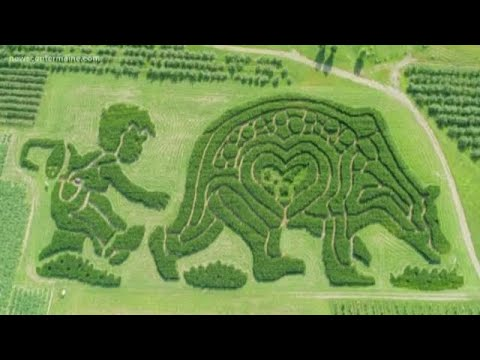 Maine corn maze competes for national title