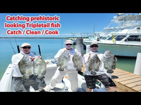 Sight Fishing Free Floating Prehistoric Looking Tripletail Fish In Florida Bay (Catch Clean Cook)