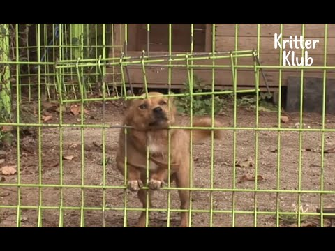 Love-Deprived Dog Escapes Every Day To Meet His Mom Who Doesn't Love Him Back | Kritter Klub