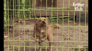LoveDeprived Dog Escapes Every Day To Meet His Mom Who Doesn't Love Him Back | Kritter Klub