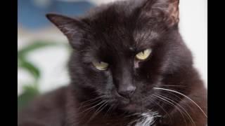 Мурчание кошки самое лучшее средство для расслабления!