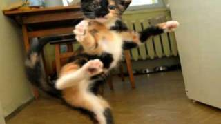 Very Funny Cats 84