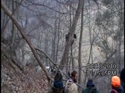 WV Bear Hunting with Hounds- Jumping Bear