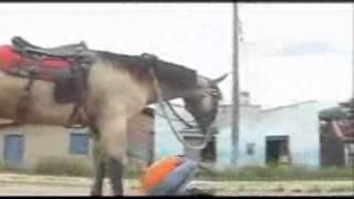 ياصبر الحصان على ذا الحمار هههههههههههه
