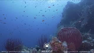 Diving Misool | Indonesia | Part 1