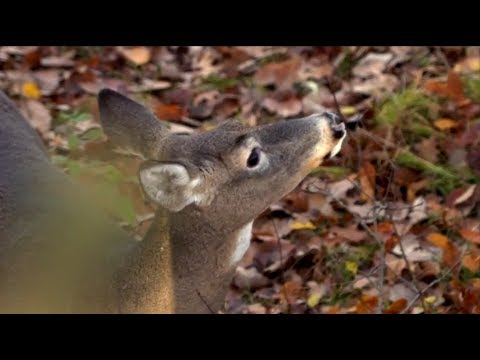 #1 Form Of Scent Control For Deer