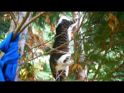 Cats in the trees
