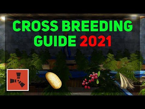 Cross Breeding Guide (updated 2021) | Rust