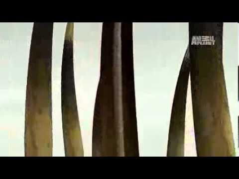 Thú nuôi nhím lùn châu phi