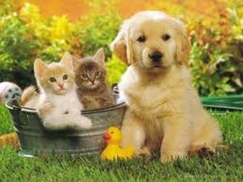 Unduh 78+ Gambar Kucing Dan Anjing Lucu Paling Baru Gratis