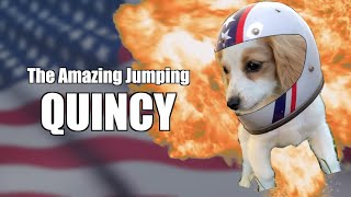 Quincy The Amazing Jumping Dog