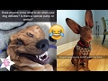 100 Funniest DoG Snapchat All DoG Lover 100% LOVE IT