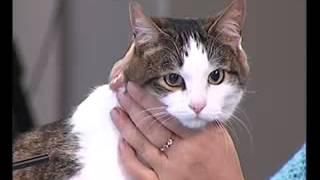 Котейка отдастся в хорошие руки!