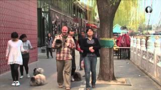 Планета собак. Пекинес