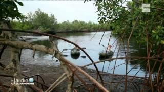 Le Jardin Extraordinaire RTBF 1 - Les mystères du fleuve Congo - chutes de Zongo - Mangrove