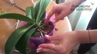 Смотреть видео цветы комнатные орхидея отцвела что делать с цветоносом