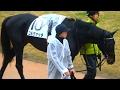 コルヴァッチ、新馬戦のパドック。京都競馬場、現地映像